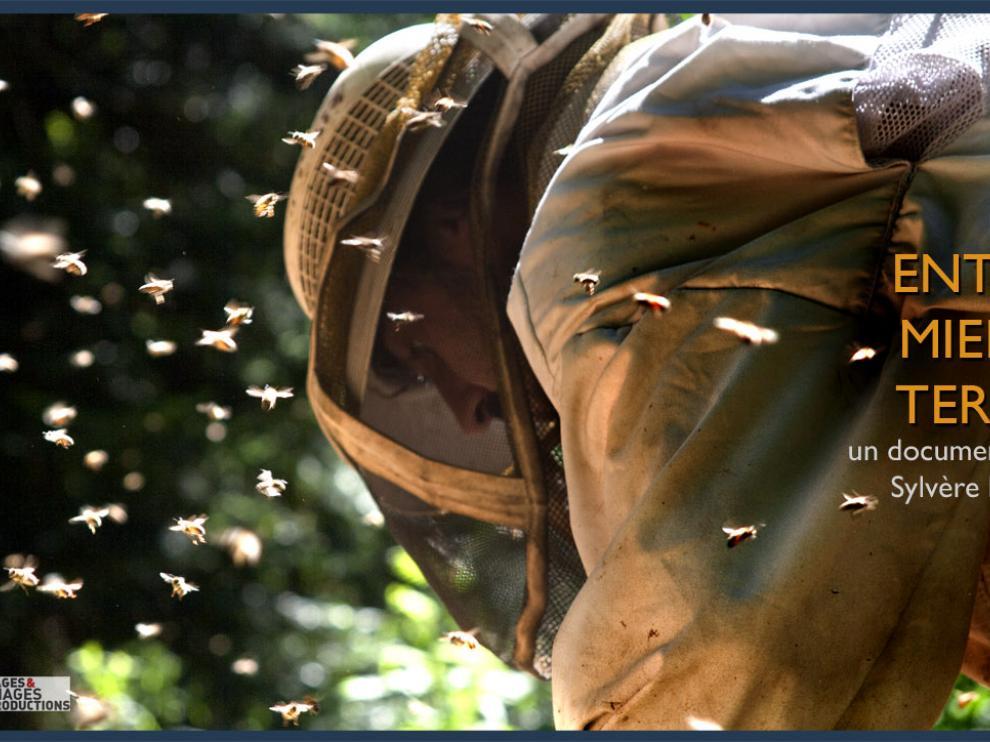 37 millions d'abeilles retrouvées mortes au Canada Visuel_emt_2