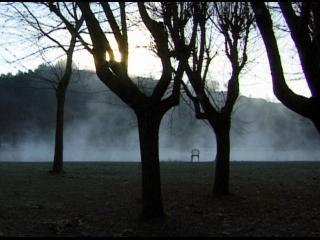 Arbres au lever du jour, dans un décor brumeux