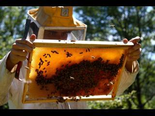 Un apiculteur en tenue regarde de près le cadre mobile d'une ruche