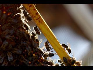 Gros plan du cadre mobile d'une ruche