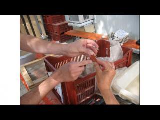 Des mains manipulent des échantillons