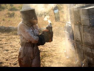 Un agriculteur enfume des ruches avant de les déplacer