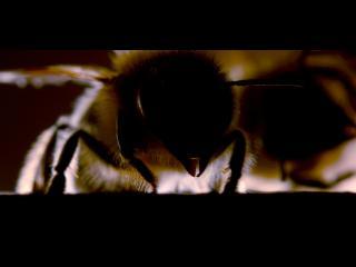 Gros plan sur deux abeilles