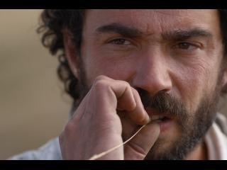 Gros plan sur le visage d'un homme brun barbu qui mordille une brindille