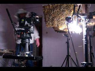 Installation d'une ruche au centre d'une pièce, de sorte à pouvoir les filmer