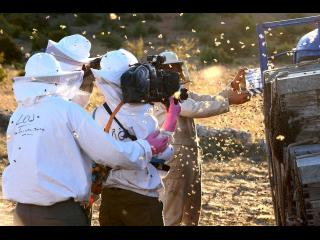 Un apiculteur manipule des abeilles tandis que l'équipe de tournage le filme