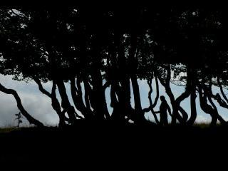 Forêt à contre-jour