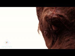Gros plan sur l'oeil de l'homme kangourou
