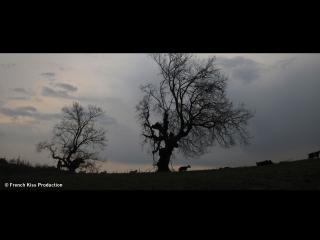 Tombée du jour sur une plaine habitée par deux grands arbres et des moutons
