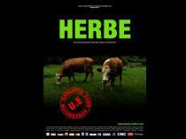 """Affiche de """"Herbe"""" représentant deux vaches en train de brouter"""