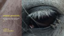 Animal pensivité. Affiche du film de Christine Baudillon